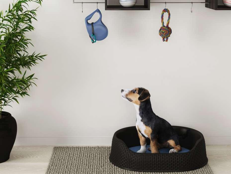 لانه حصیری سگ و گربه کرور (CURVER) سایز متوسط